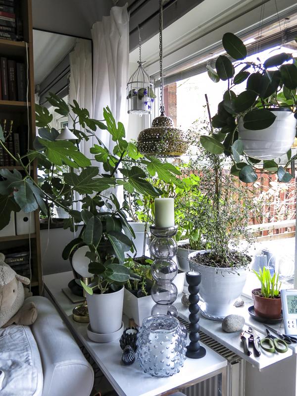 livingroom, window
