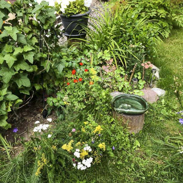 garden, greenery