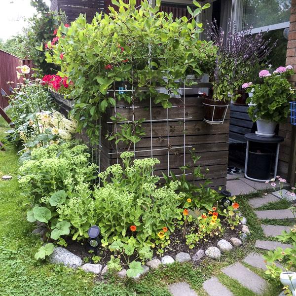 garden, entrance, greenery