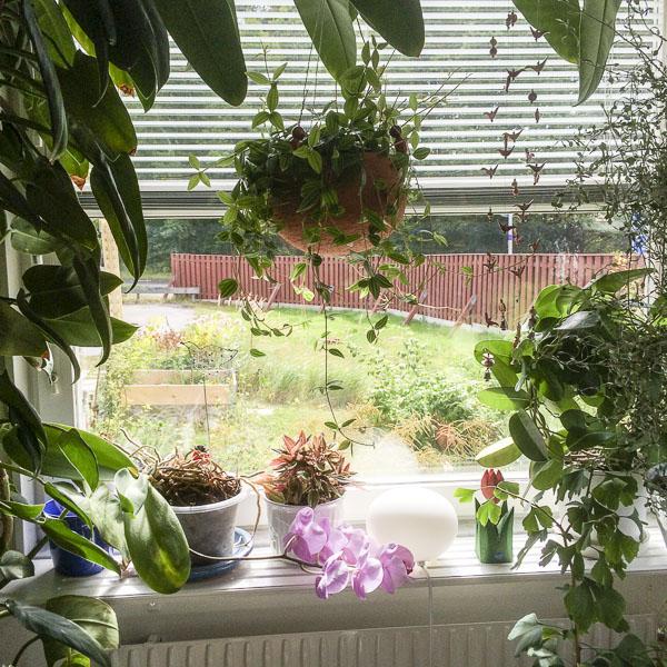 kitchenwindow, houseplants