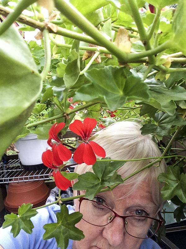 plantselfie, pelargonia, balconred