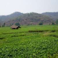 Farmland in Hsipaw