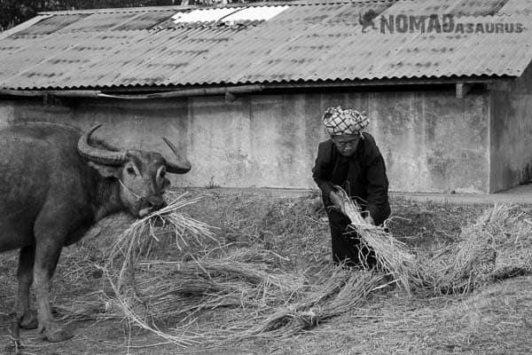 Lady water buffalo people of Myanmar