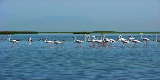 Puri Tourist Places to visit in Puri Sightseeing - Chilika Lake