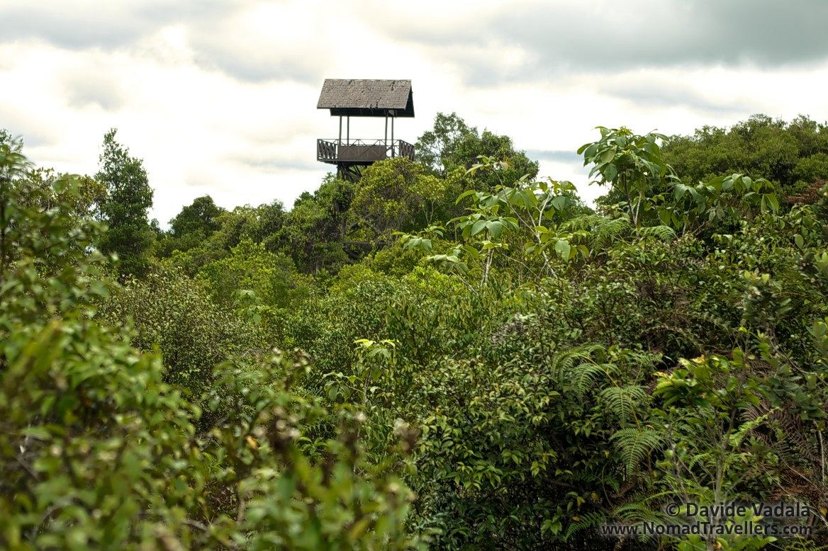 watching tower over the vegetation in kersik luway national park