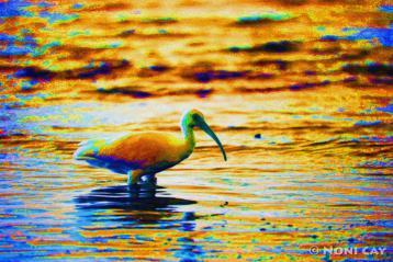 IMG_0733.jpgIbis painted#2halfsize