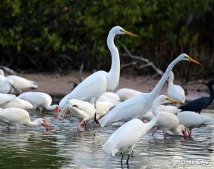 IMG_1451 resize Water Birds