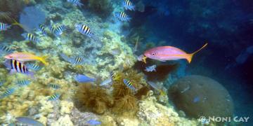 DSC02065Reef Fish