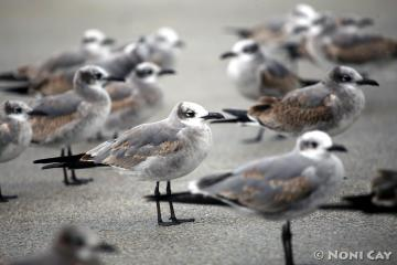 IMG_5909ShoreBirds
