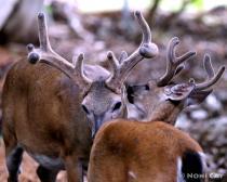 IMG_9150.DeerLoveAmongstBrothers
