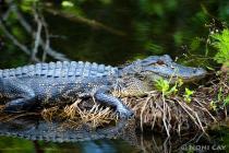 IMG_5704Swamp