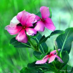 IMG_1203.IslandWildflowers