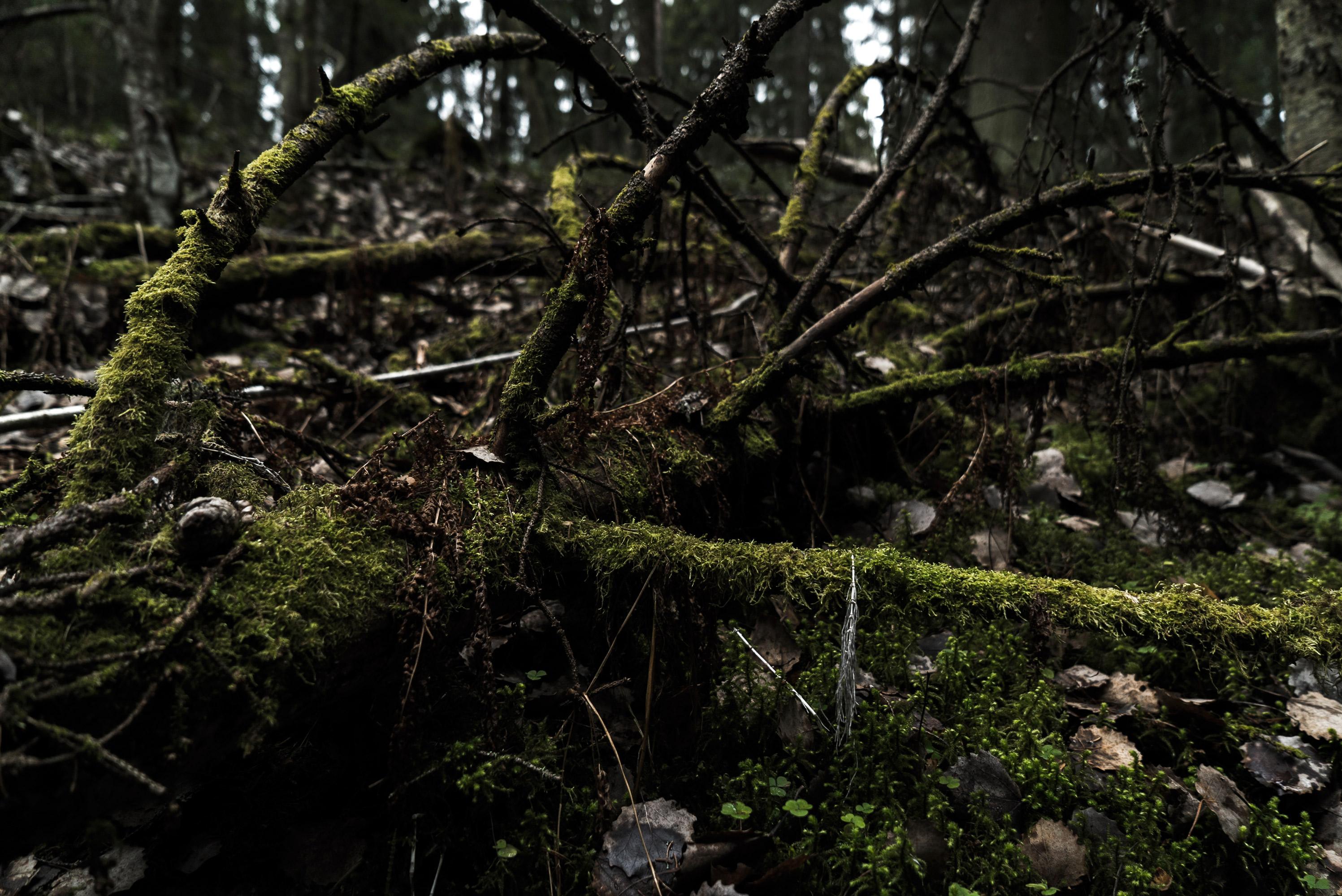 nd_nature_tree2