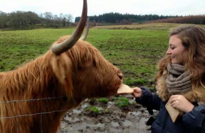 Meghan Davis, a BNS major, with a Scottish hair cow.
