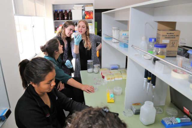 Students looking at petri dishes in a lab in Chile.
