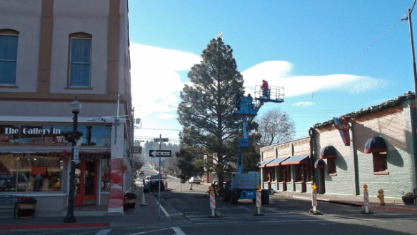 City of Williams Christmas tree set up on Second Street.