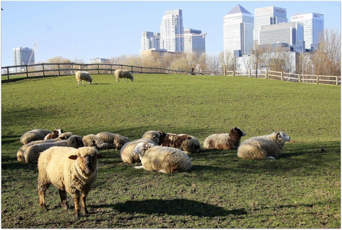 Notas desde una granja urbana