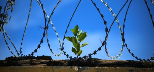 Plant growing through barbed wire