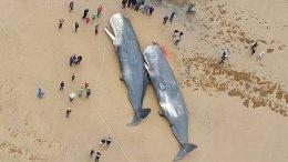 ballenas muertas 1