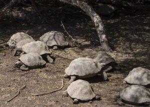 So many tortoises...
