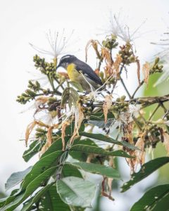 Morning in Pacto, Bird