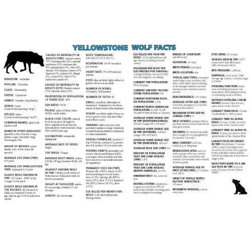 Medium Crop Of Male Wolf Names