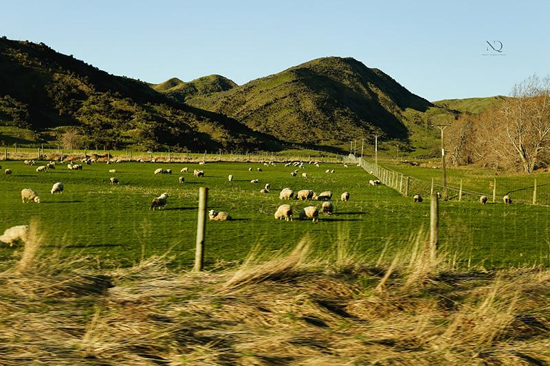 JULIUS X FRANCE | NEW ZEALAND