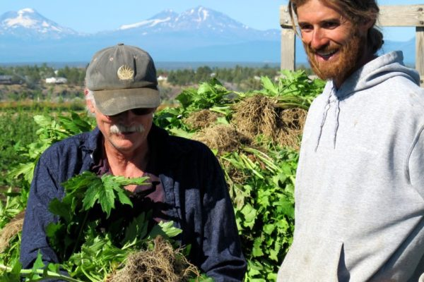 Randy Buresh and son Adam harvesting biodynamically grown valerian at their farm in western Oregon.
