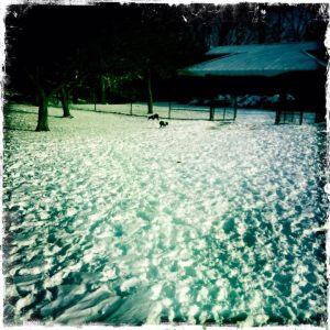 snowpups