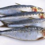 Sardines, anxoves i arengades, opcions bones i barates!