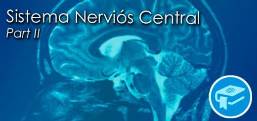 Apunts-SistemaNerviosCentral2