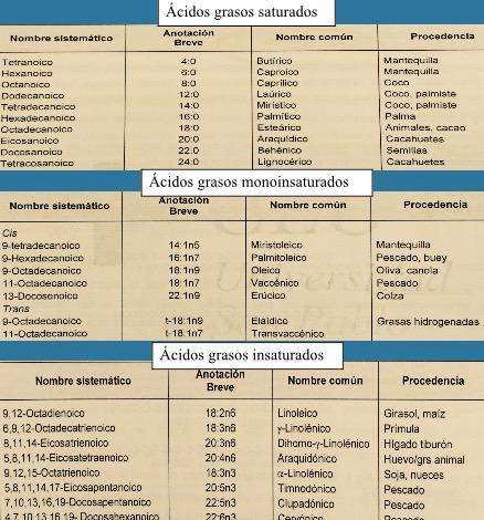foto acidos grasos