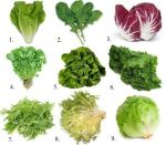 Is Every Salad Green Equally Good For You?