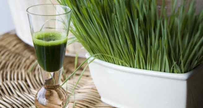 Control diabetes – lower blood glucose with wheatgrass