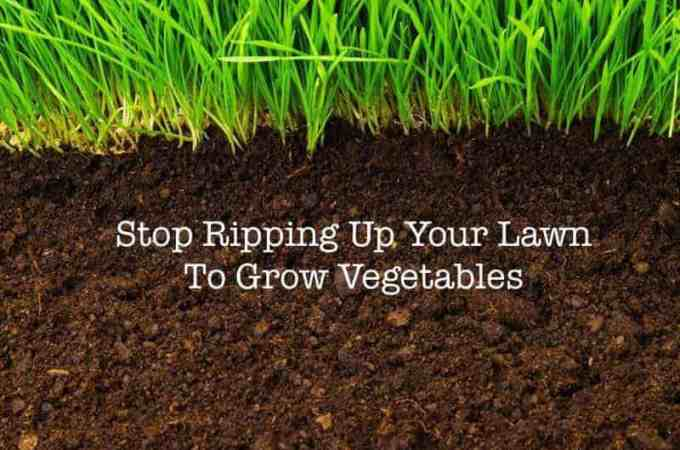Stop Ripping Up Your Lawn To Grow Veggies