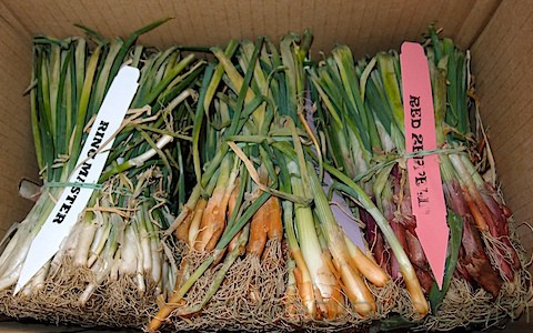 7 Ways To Save Money On Seeds – Without Saving Seeds