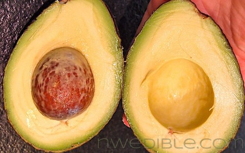 how to tell if an avocado is ripe pinterest