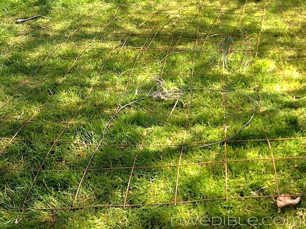 Concrete mesh on lawn