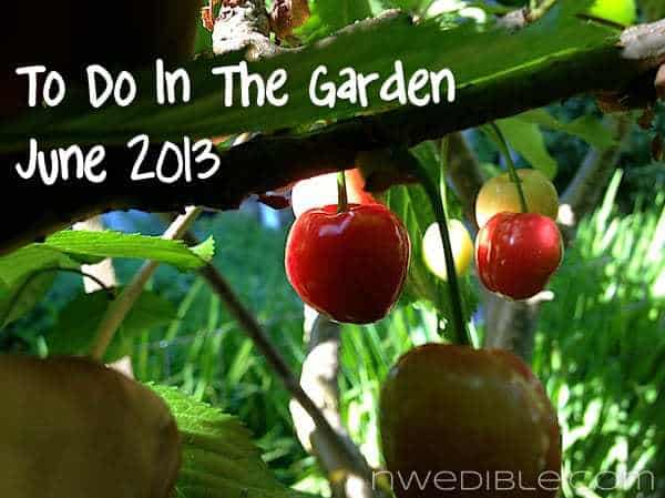 To Do In The Northwest Edible Garden: June 2013