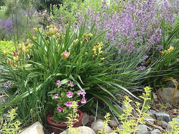 The Garden in Pictures: Late June