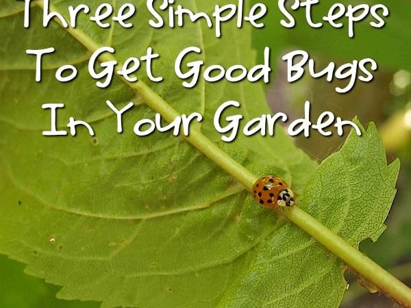 Three Simple Steps To Bring Beneficial Insects To Your Garden