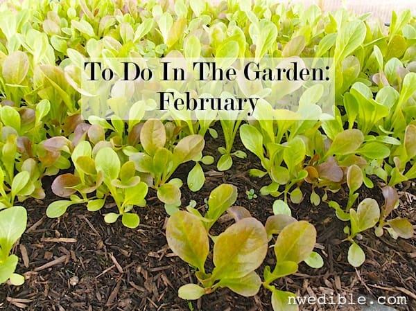 To Do In The NW Edible Garden: February 2014