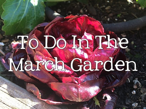 To Do In The Northwest Edible Garden: March 2014