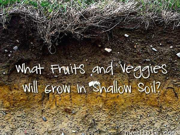 {Reader Question} What Fruits And Veggies Will Grow In Shallow Soil?