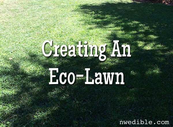 How And Why To Make An Eco-Lawn