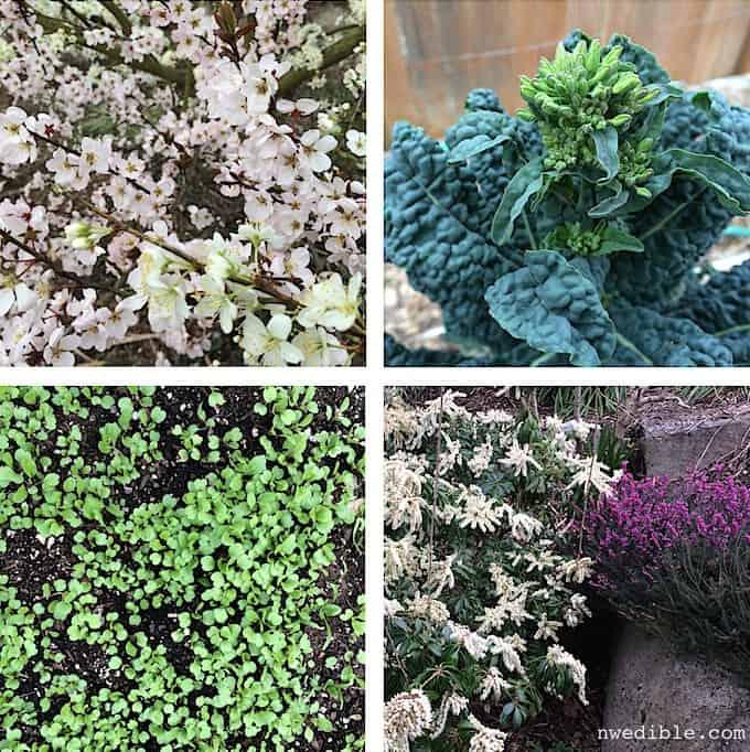 march-garden