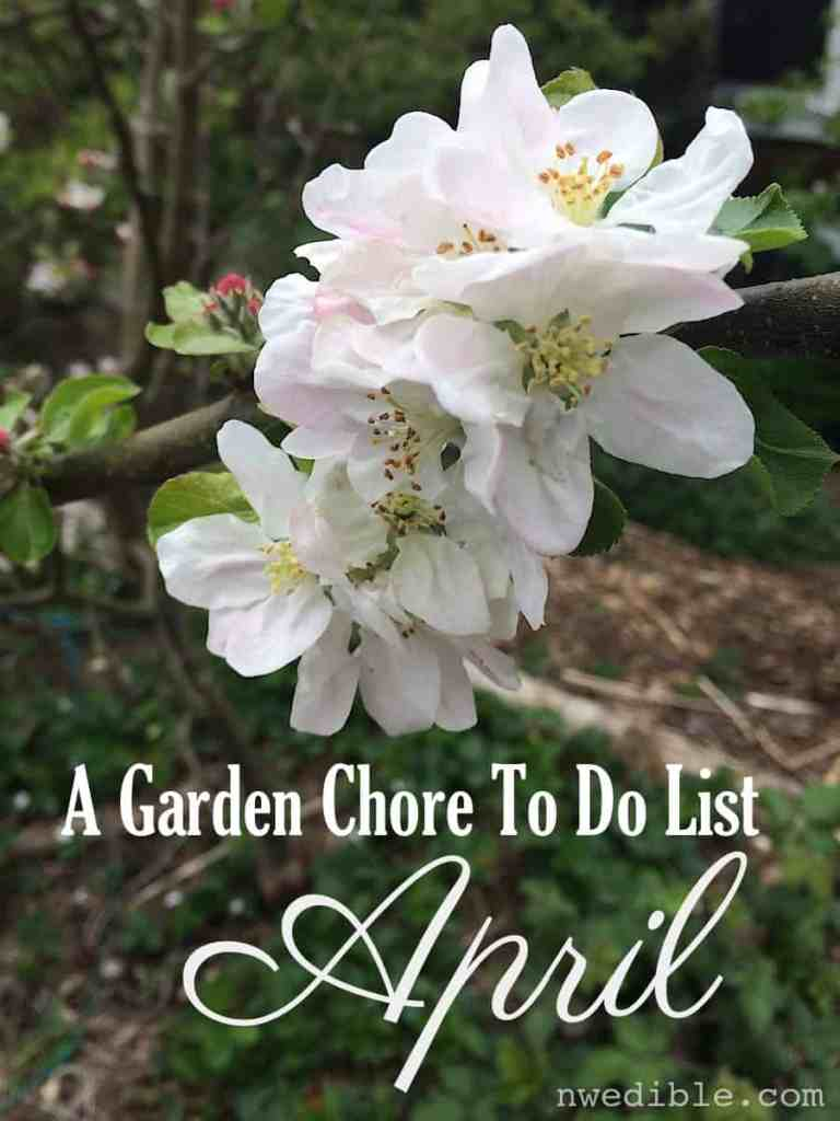 Complete vegetable gardener's chore list for April.
