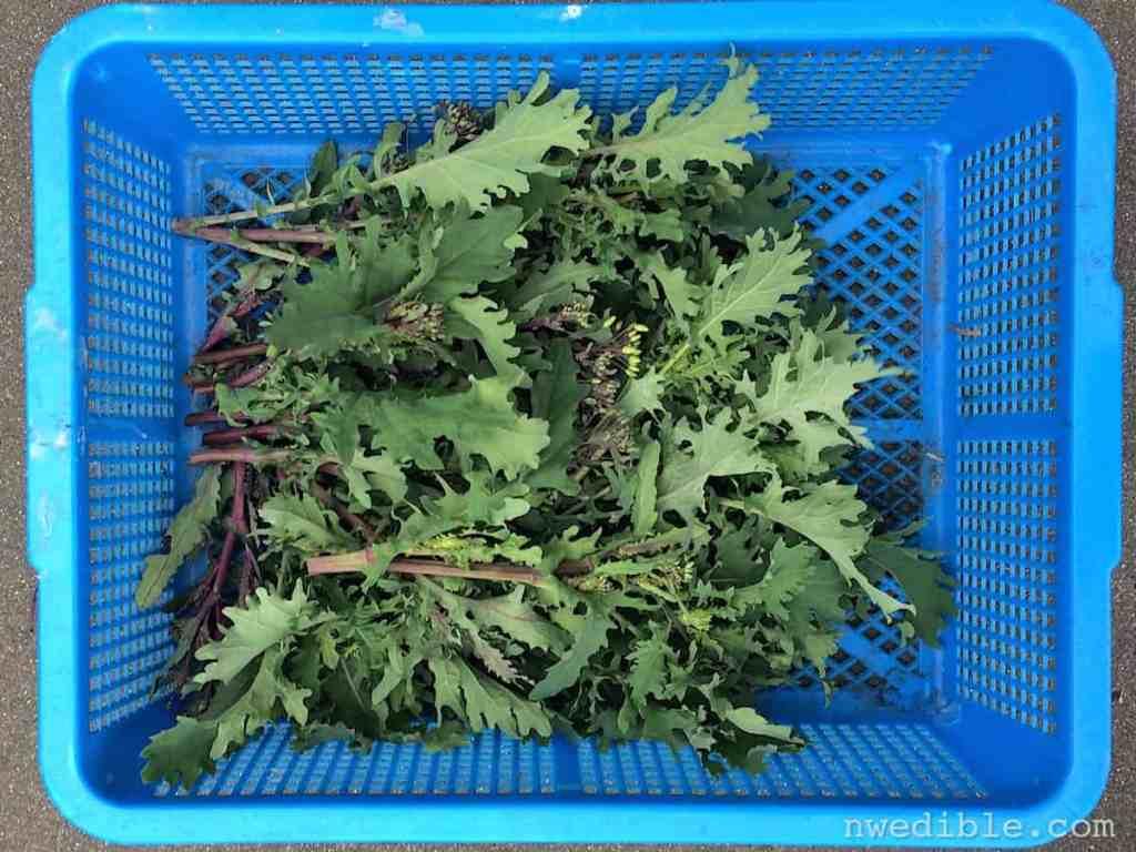Kale Florets14