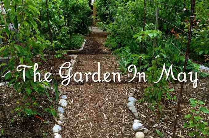 The Garden In May – Photo Tour