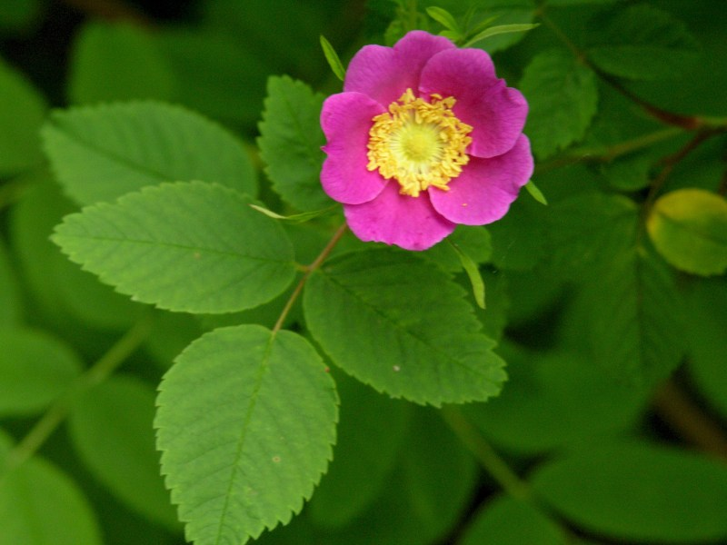 Large Of How To Grow Roses From Seeds